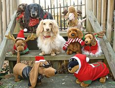 All I want for Christmas is dogssssssssssssssssssssssssssssss and catsssssssssssssssssssssssssssssss