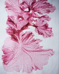 seaweed | Mikkel Vang