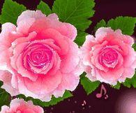Animated Pink Roses and Little Bird Chirping