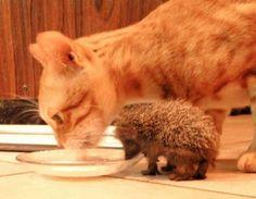 Kitty + hedgehog