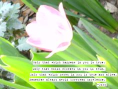 Another installment from the photoquotes series I am currently working on. Enjoy this quote from Osho!