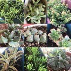 Gotta love my succulents 🙌🏻💚🍃🌱 Planting Succulents, Plants, Plant, Planets