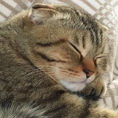 Marsi'nin Pazar keyfi  #Marsel #PazarKeyfi #Instacat #instagramcats #Cat #BabyCat #Marsi #Pisi by sezin_boztekin