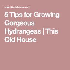 5 Tips for Growing Gorgeous Hydrangeas | This Old House