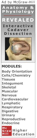 Muscular System: Anatomy and Physiology | Muscle Anatomy | Quizzes