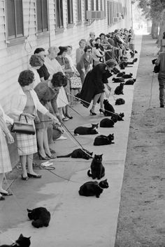1961, Hollywood, California. Following a newspaper casting call, black cats are auditioning for the feline role in Roger Corman's Tales of Terror (1962). Photos taken by Ralph Crane for Time magazine.