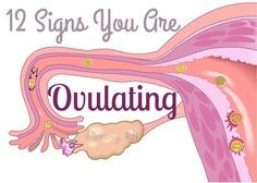Today I have Phil from Ovulation Calculator to share 12 signs that you are ovula… – Pregnancy Calculator – Schwangerschaft Getting Pregnant Tips, Get Pregnant Fast, Trying To Get Pregnant, Ovulation Signs, Ovulation Symptoms, Ovulation Calculator, Pregnancy Calculator, Pregnancy Help, Pregnancy Signs