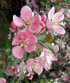 Pink wild flowers.