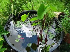 35 Gallon Container Pond with Koi fish. www.ContainerWaterGardens.net