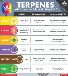 Medical Benefits of Cannabis Medical Benefits Of Cannabis, Medical Marijuana, Marijuana Facts, Endocannabinoid System, Cbd Hemp Oil, Start Ups, Oil Benefits, Health Benefits, Health Tips