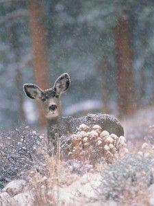 deer-in-winter-forest