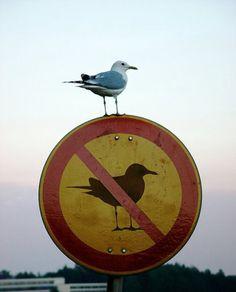 bird, no bird