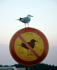 Seagull does not respect your rules