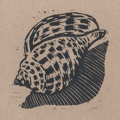 Junonia Shell - linocut print - Polly E. Perkins, U.S.A. | The use of line inspires me, especially the shadow.