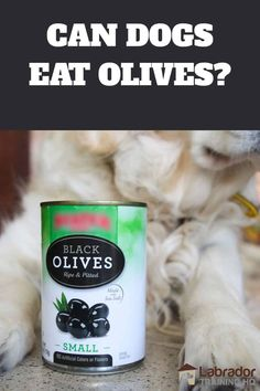 Can Dogs Eat Olives? - Can of black olives sitting in between Golden Retrievers paws. Best Treats For Dogs, Healthy Eyes, Dog Diet, Can Dogs Eat, Best Diet Plan, Dog Care Tips, Dry Dog Food, Dog Feeding, Best Diets