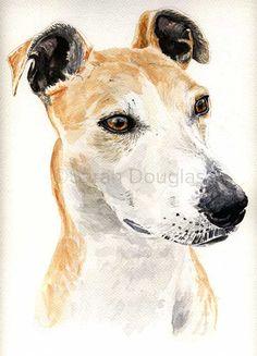 Lurcher dog pet portrait in watercolour by Sarah Douglas
