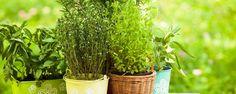 5 coisas que você pode fazer no jardim durante o horário de verão - Se na sua região você teve que adiantar o relógio em uma hora, você está oficialmente no horário de verão. Como o dia demora mais para anoitecer você pode aproveitar para fazer mais atividades ao ar livre, como deixar seu jardim ainda mais bonito. Que tal? Preparamos uma lista com 5 tarefas que v... - http://www.ecoadubo.blog.br/ecoblog/2015/10/30/5-coisas-que-voce-pode-fazer-no-jardim-durante-o-ho