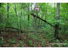 tutu guy Fallen-Tree-Bob-Carey-Photography
