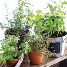 Always wanted to grow your own herb garden, but weren't sure where to start? Check out these easy guide for beginners.