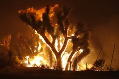 Wildfire started in California's Angeles National Forest, Jun 6, 2013