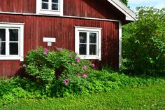 Sense it. See it. Feel it. The blooming Finland and its' hidden summer gardens you will find by following us also on  Instagram: https://www.instagram.com/activeholidayfinland/ Facebook: https://www.facebook.com/activeholidayfinland/ Twitter: https://twitter.com/ActiveFinland