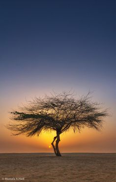 The sun sets behind a solitary tree.  Bahrain.  Photography by Mustafa AbdulHadi.