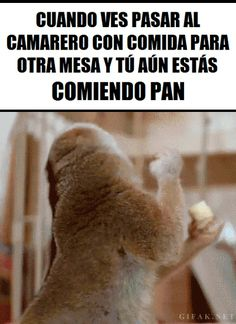 ANIMALES Loquillos