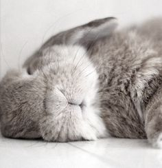 sleeping #rabbit #うさぎ
