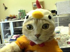 I always smile when this pops up on Funny Cat Photos on my gmail account haha