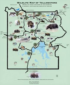 yellowstone map | Wildlife Map of Yellowstone – the yellowstone daily – Photography ...
