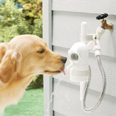 Sonar-Sensing Automatic Pet Fountain - The WaterDog automatic outdoor pet drinking fountain lets your dog help itself to fresh water