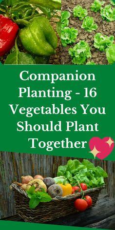 Vegetable Companion Planting, Companion Gardening, Vegetable Garden For Beginners, Home Vegetable Garden, Planting Vegetables, Fruit Garden, Gardening For Beginners, Growing Vegetables, Bucket Gardening