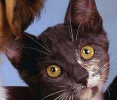 Pisicile orasului – tolerate, prea putin ingrijite, adesea victime in trafic – www.ConstantaMea.com