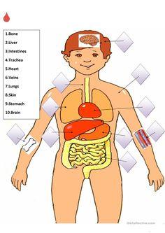 Internal Organs Match