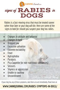 The Signs Of Rabies In Dogs