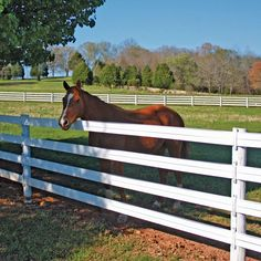 Diy Horse Fencing, Pasture Fencing, Ranch Fencing, Farm Fence, Dog Fence, Wood Fences, Horse Stables, Horse Farms, Horse Paddock