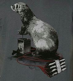 Ferret and dynamite t-shirt - animal t-shirt - graphic t-shirt Cute Ferrets, Love Bugs, Pet Store, Otters, Shelter, Photo Art, Adoption, Batman, Superhero