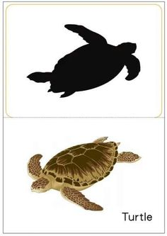 matching pictures to shadows worksheets Right Brain, Puzzle Books, Brain Activities, Zoo Animals, Worksheets, Turtle, Sorting, Karma, Shadows