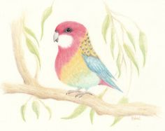 Rosella Bird Original Pencil Drawing by WhimsicalTailsArt on Etsy, $50.00
