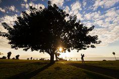 Jugar al #golf en #otoño, bajo un clima estupendo y en un entorno inigualable es posible en #GolfCostaAdeje :) #BienvenidoOtoño #ElMejorClimadelMundo ····· Playing #Golf in #Autumn with a fantastic weather and in an unique environment is possible in #GolfCostaAdeje :) #WelcomeAutumn #TheBestClimateintheWorld Canario, Tenerife, Golf, Flora, Celestial, Sunset, Balcony, Outdoor, Carnival