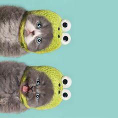 Sideways kitteh.