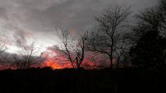 Fiery Sunset Over Treetops Cape Cod  #sky #fiery #sunset #treetops #cape #photography