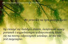 . Parsley, Herbs, Herb, Medicinal Plants