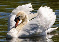 Beautiful World, Wildlife, Creatures, Birds, Nature, Ikon, Facebook, Google, Photos