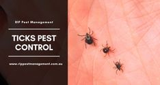 Why Are Ticks Causing So Much Problem in Sydney? Pest Management, North Shore, Ticks, Pest Control, Beaches, Sydney, How To Become, Meat, Life