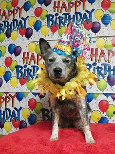 Happy Birthday Cake With Blue Heeler Dogs