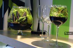 Cheers! biconeo-aquascaping:  Meine Mini-Scapes #aquascaping #aquarium