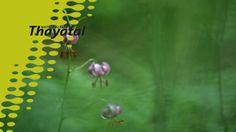 Die Naturfotografen Marc Graf und Christine Sonvilla sind seid mehr als einem Jahr unterwegs im Nationalpark Thayatal. Warum sie der Nationalpark immer wieder anzieht, was für sie das Besondere am Nationalpark Thayatal ist, das verraten sie in diesem kurzen Video. Graf, National Forest