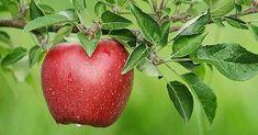 Prekvapenie: Prečo je obyčajné jablko jedno z najlepších hojivých potravín
