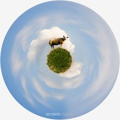 Tiny planet sheep
